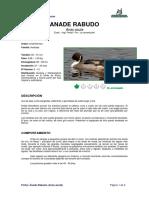 Ficha ANADE RABUDO _Anas acuta_.pdf