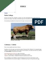 Razas de Vacas Gallegas