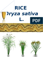 RICE Emasculation