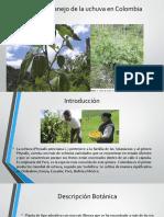 Manejo de La Uchuva en Colombia