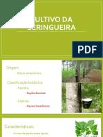 Cultivo de Seringueira