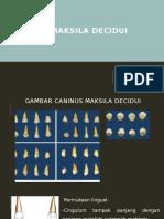 CANINUS MAKSILA DECIDUI.pptx