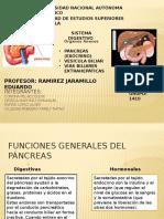 Anatomia Del Pancreas
