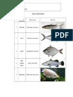 Ikan Air Payau Dan Nama Latinnya