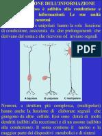 Fisiologia generale slide 3