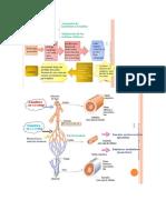 Circulación Sanguinea y Linfatica