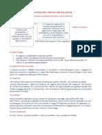 Il Sistema Del Checks and Balances