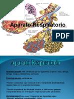 APARATO RESPIRATORIO1