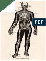 Cathe Holden Skeleton Table