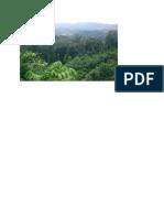 Gambar Hutan Hujan Tropis