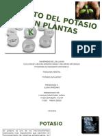 Fisiologia Potasio en Plantas
