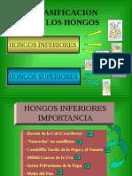 (Lab) Hongos Inferiores (_)