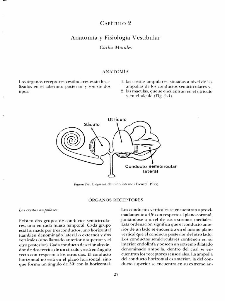 Fantástico Nivel 2 Anatomía Y Fisiología Colección - Imágenes de ...