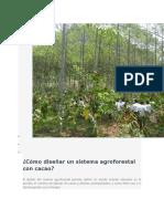Cómo Diseñar Un Sistema Agroforestal Con Cacao