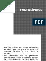 fosfolpidos
