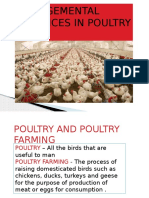 Managemental Practices in Poultry Farm