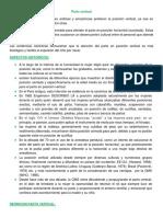 Parto Vertical Texto Expo