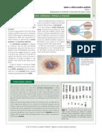 Il nucleo e la sua riproduzione cellulare mitosi e meiosi.pdf