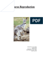 Kangaroo Reproduction