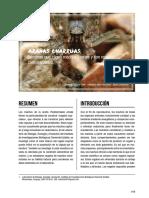 Arañas Charruas BSE Pruebas