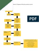Evidencia 2 Flujograma Informativo Productor Nacional