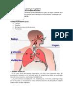 Anatomía y fisiologia respiratoria