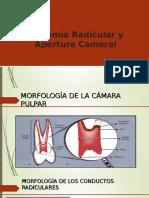 Anatomia y Apertura Cameral