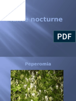 Plante Nocturne