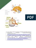 El Sistema Nervioso Es Una Red Compleja de Estructuras Especializadas(Imprimir)