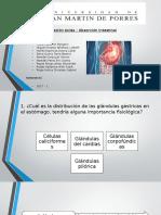 seminario 1 diapos sistema gastrointestinal