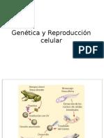 Genetica y Reproduccion Celular 2017