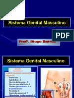 Anatomia Do Aparelho Reprodutor Feminino e Masculino