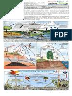 7° Guía 6. Ciclos biogeoquímicos Biología y Química 2017
