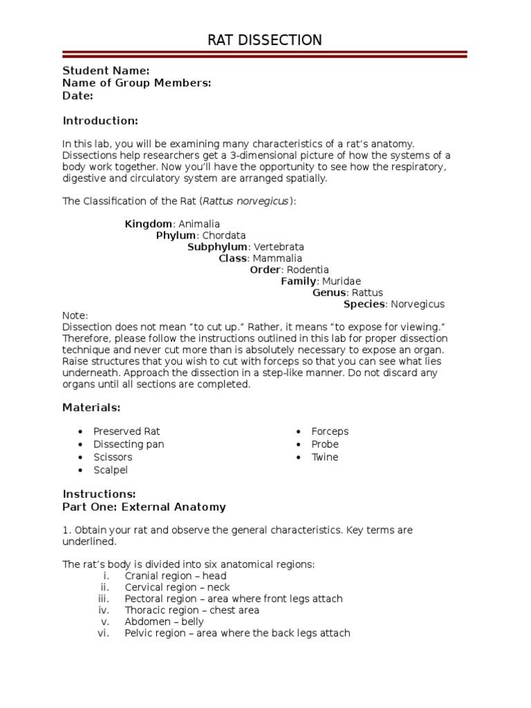 worksheet Rat Dissection Worksheet rat dissection student version small intestine gastrointestinal tract