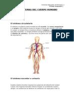 Unidad 1 Natural Science 4º Sistemas Del Cuerpo Humano