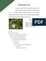 morfologi kangkung