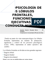 Lobulos frontales
