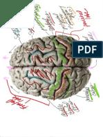 Neuro Lab 1 Drawings