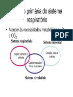 1 Introdução Sistema Respiratório