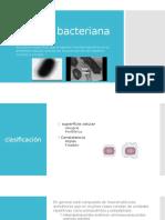 capsulas bacterianas