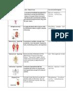 Body System Graphic Organizer