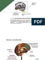 Violencia y Neuropsico