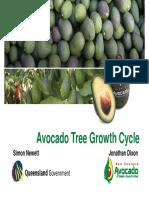 AVO - Avocado Tree Growth Cycle