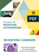 Neospora-caninum