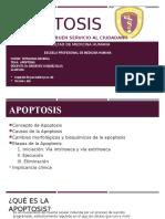 Apoptosis (Robbins y Cotran)