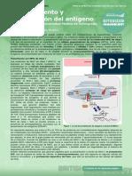 1. Antigen Processing and Presentation (Procesamiento y Presentación Del Antígeno)