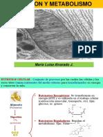 Nutricion%2c metabolismo%2c citoesqueleto.pdf
