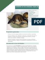 Desarrollo Del Embrión en Los Animales
