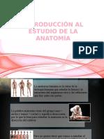introduccionalaanatomia-140415192617-phpapp02