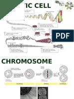 iMSc Developmental Biology New.pptx
